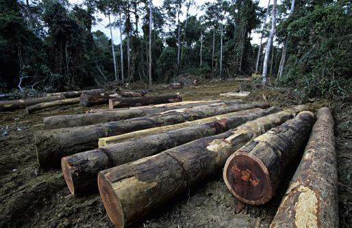 Deforestation in Gabon.