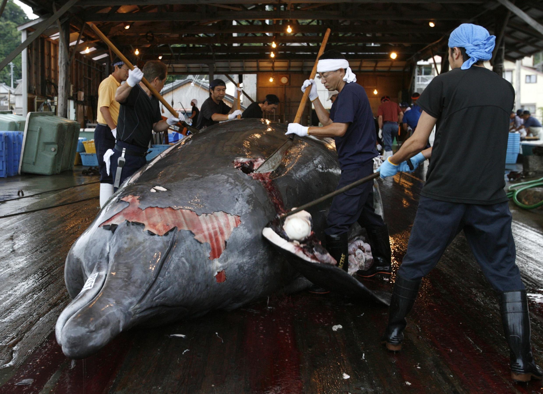 Xả thịt cá voi tại cảng Wada Minamiboso, đông nam Nhật Bản, 28/6/2008.