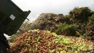 Grandes redes varejistas despejam água sanitária para impedir consumo de alimentos que sobram nas prateleiras