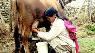Image tirée de «Ecouter les chants des paysans du village de Likir en Inde».