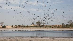 La lagune de Mballing, au Sénégal.