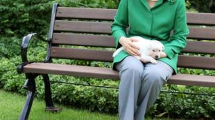 Abandono de cães: ex-presidente pode responder à queixa de associação.