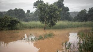 Un champ est submergé par les eaux de la rivière Ubangi, à Bangui, le 25 octobre 2019.