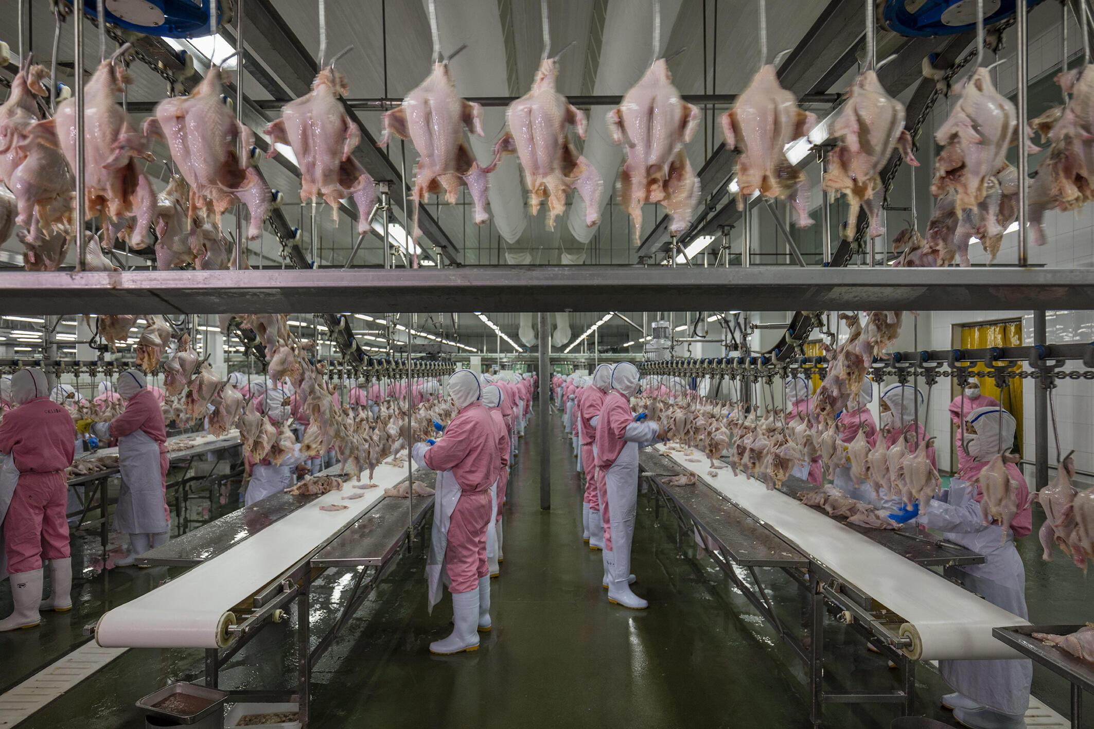 Usina de transformação de frangos na China.