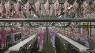 Frangos na China: a indústria da alimentação é tema do fotojornalista George Steinmetz.