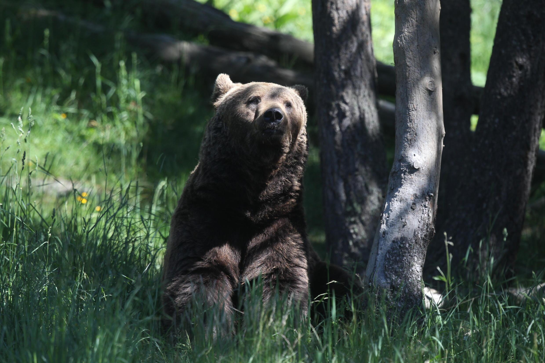 2020-06-17 france pyrenees bear