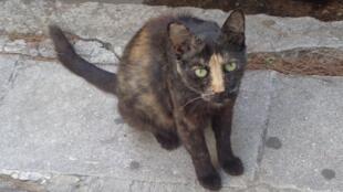 A Ong Nine Lives na Grécia posta fotos dos gatos abandonados em sua página no Facebook.