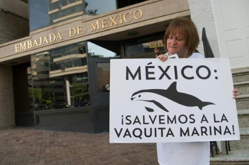 Una ecologista pide protección para la vaquita marina delante de la embajada de México en Washington (2018)