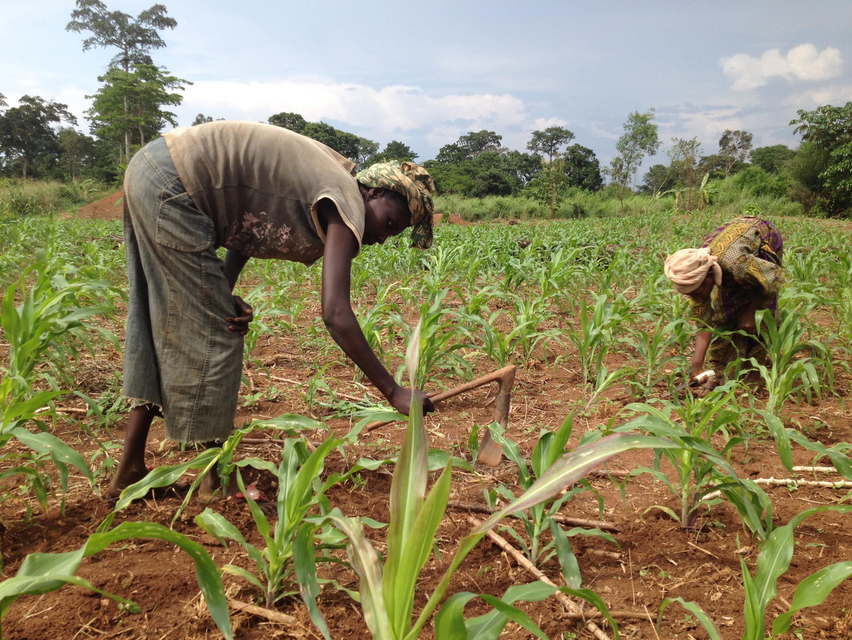 """O relatório anual sobre o Estado Mundial da Agricultura e da Alimentação da FAO 2016, se concentra nas """"Mudanças Climáticas, Agricultura e na Segurança""""."""