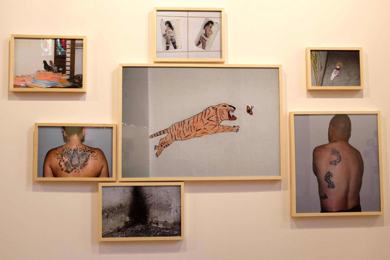 Vue du mur « Le Tigre et le papillon » dans l'exposition « L'œilleton inversé », réalisée par l'artiste photographe Arnaud Théval.