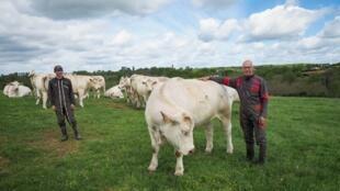 به موجب قرارداد جدید چهار کشور آمریکای لاتین قادر خواهند بود سالانه به میزان ۹۹ هزار تن گوشت گاو را بدون پرداخت عوارض گمرکی به کشورهای اروپایی صادر کنند