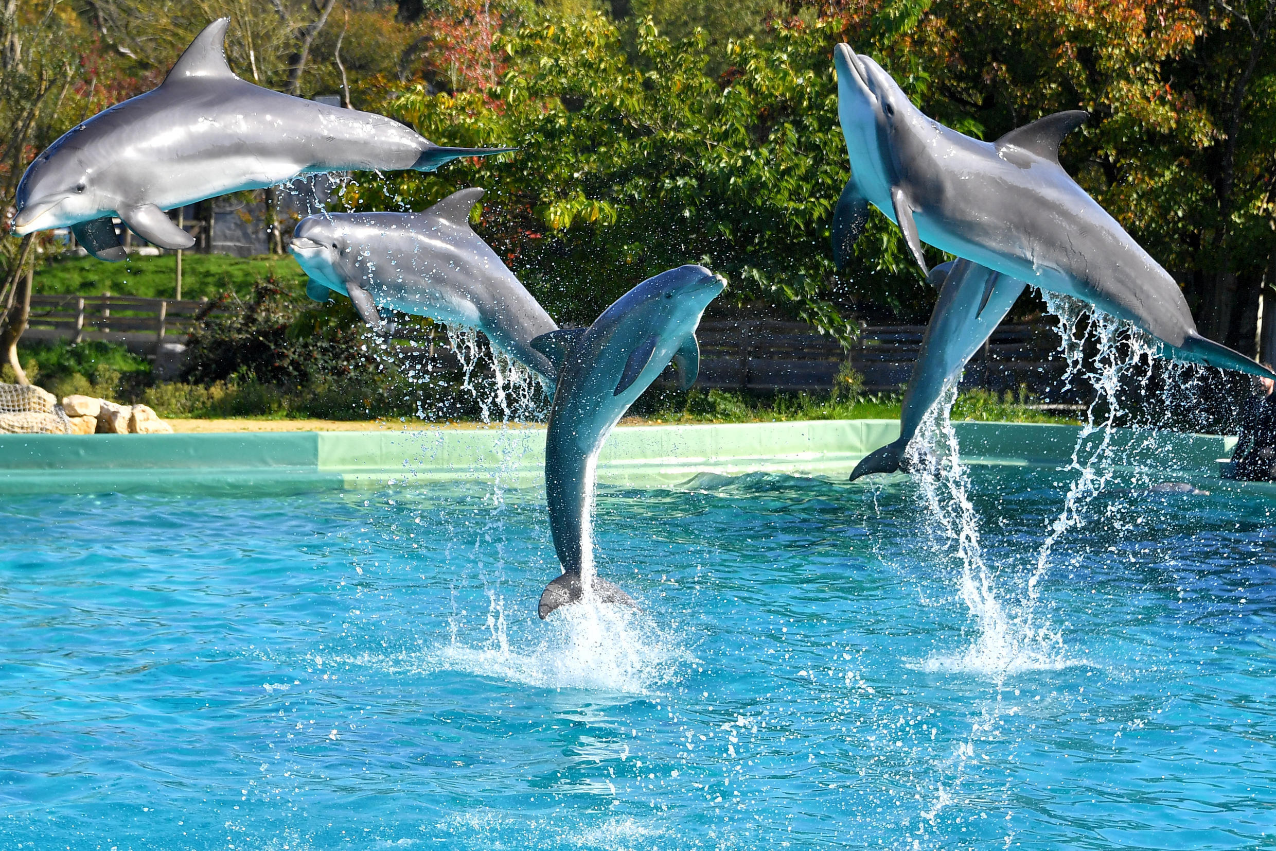 France's dolphinariums will also no longer be able to breed or bring in new dolphins or killer whales