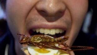 En Asie (ici au Japon), manger des insectes est bien plus courant qu'en Europe.