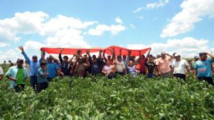 Campesinos sin tierra ocupan un campo de soja de un gran propietario brasileño, Paraguay  diciembre  2011.