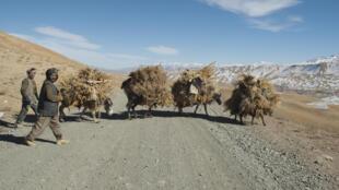 Des fermiers de la communauté des Hazaras, en Afghanistan.
