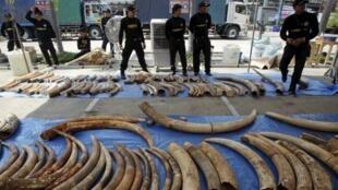 Châu Á là thị trường tiêu thụ lớn cho nạn buôn lậu ngà voi.