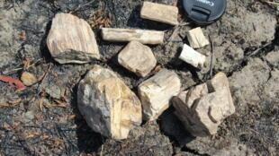 Troncos Fosseis - Nelson Nhamutole - Troncos de árvore fossilizados - Ciência - Moçambique - Niassa - Fóssil