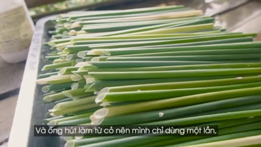 Sáng kiến thay ống hút nhựa bằng ống hút làm từ cỏ bàng