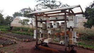 Ruches du centre international pour insectes de Nairobi.