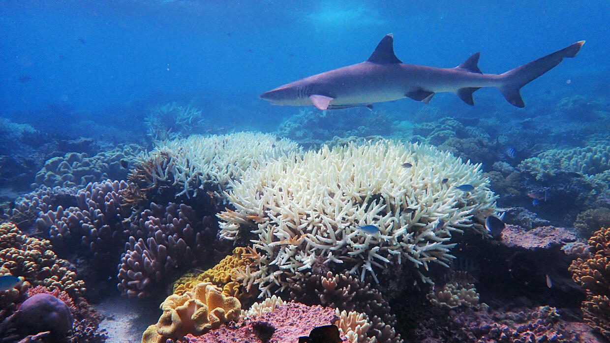 Global warming to cause 'catastrophic' species loss: study - RFI