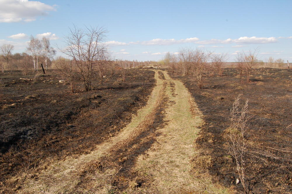 Лесные пожары в «российском Чернобыле» - регулярное сезонное явление.