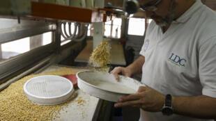 Un technicien collecte des échantillons de soja pour les anlayser dans l'usine Louis Dreyfus à General Lagos, en Argentine, le 13 septembre 2017.
