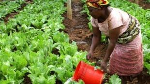 Les femmes sont l'avenir de l'agriculture selon la FAO