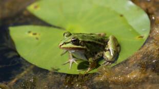 Trên danh sách bao gồm hàng trăm loài động-thực vật, có 21 loài ếch nhái mới được phát hiện - DR