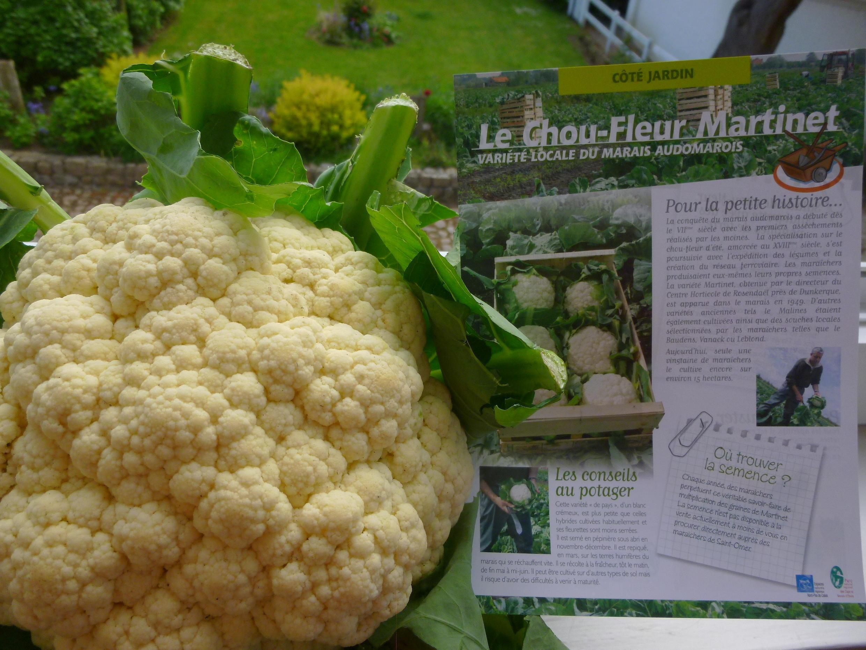法國著名花菜品種---馬爾丁內奶油花菜(Chou-fleur Martinet)