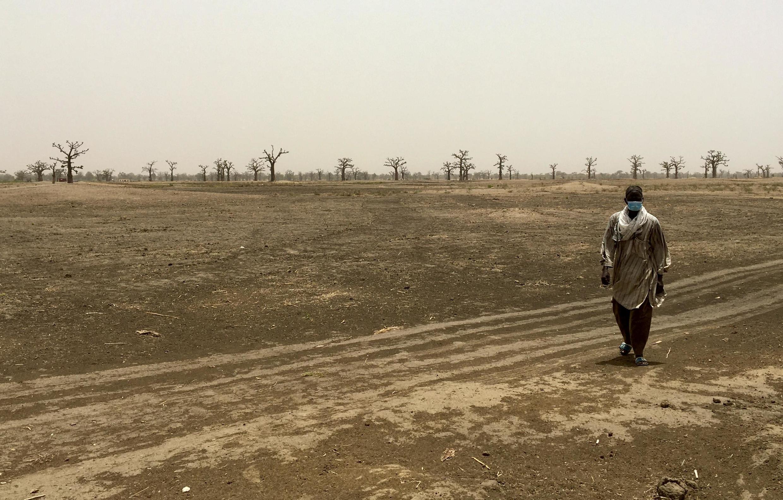 Sur les terres voisines du village de Ndingler, département de Mbour, le 7 juillet.