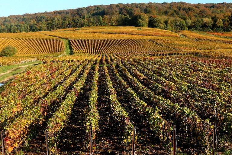 File photo of champagne vineyards adorned with autumn colors, after the harvest, in Mailly-Champagne near Reims, eastern France.