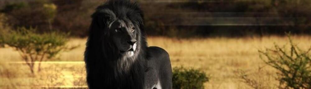 La fondation philantropiste « Black Lion » est une initiative du prince Randy Koussou Alam Sogan.