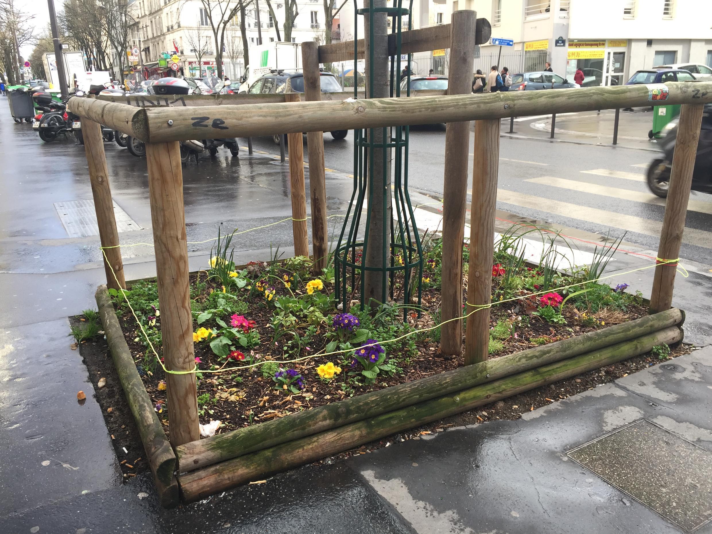 Một gốc cây được trồng thêm hoa và rau trong quận 13, Paris.