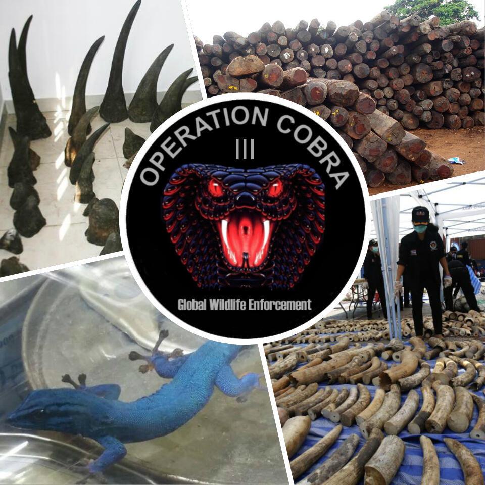 Menée en mai 2015, l'opération Cobra III, a aboutit à près de 250 saisies d'animaux ou de produits issus du trafic illégal d'espèces protégées