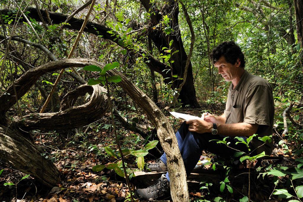 Le peintre naturaliste Roger Swainston réalise un croquis d'une liane en sous-bois d'une forêt sèche. Région de Palma, Nord Mozambique.
