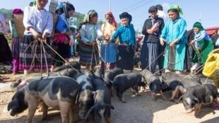 Phụ nữ dân tộc thiểu số trong một phiên chợ ở huyện Đồng Văn, tỉnh Hà Giang, Việt Nam. Ảnh mình họa