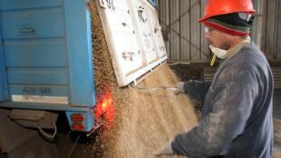 A la espera de un aumento de los precios de la soja en el mercado internacional, los agricultores argentinos almacenan parte de su producción.