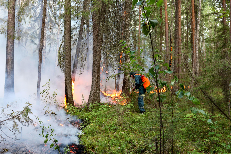 Тушение лесного пожара, Ханты-Мансийский автономный округ, 15 июля 2020 г.