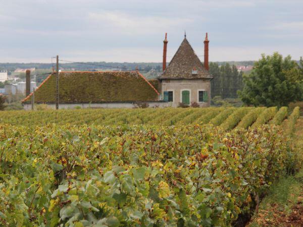 Mudança do clima também traz benefícios. Vinícolas da região da Bourgogne já apresentam vinhos melhores.