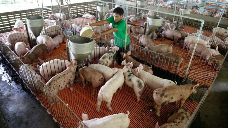 Pig-2345678765432-1