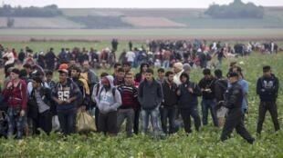 Мигранты на территории Хорватии после пересечения границы с Сербией, 24 сентября 2015.
