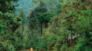 2011, Año Internacional de los Bosques