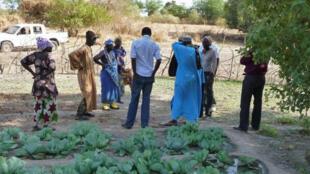 La Fédération nationale pour l'agriculture biologique veut désormais labélliser, fiabiliser et investir dans ce secteur, pour à terme proposer des produits bio sous le label « Bio Sénégal ».