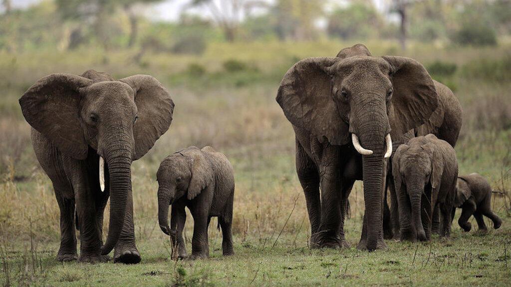 Sehemu ya Tembe wanaopatikana kwenye mbuga za Afrika Mashariki na kuvutia watalii wengi