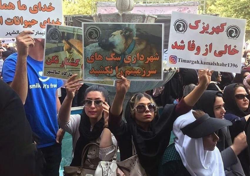 حامیان حقوق حیوانات صبح روز دوشنبه ٢٨ مرداد، با تجمع در مقابل ساختمان شهرداری تهران، به کشتار سگ ها در کهریزک اعتراض کردند و خواستار تصویب قانون حمایت از حیوانات و کنترل جمعیت سگ ها به روشی انسانی شدند.