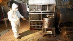 Agente sanitário desinfeta viveiro de aves em Taiwan, onde foi registrado um caso do vírus H7N9.