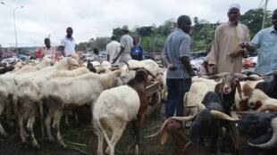 Des moutons dans un point de vente pour la Tabaski. (Image d'illustration)