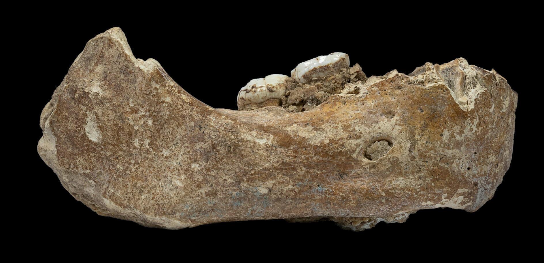 Le fossile de la moitié droite de la mâchoire de l'homme de Denisova retrouvé dans une grotte tibétaine à 3300 mètres d'altitude.