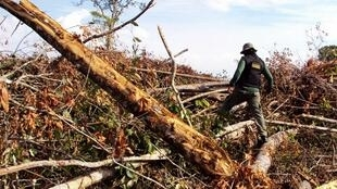 O desmatamento da Amazônia aumentou 191% em agosto e setembro de 2014, em relação ao mesmo bimestre de 2013, segundo levantamento do Instituto do Homem e Meio Ambiente da Amazônia (Imazon), de Belém.