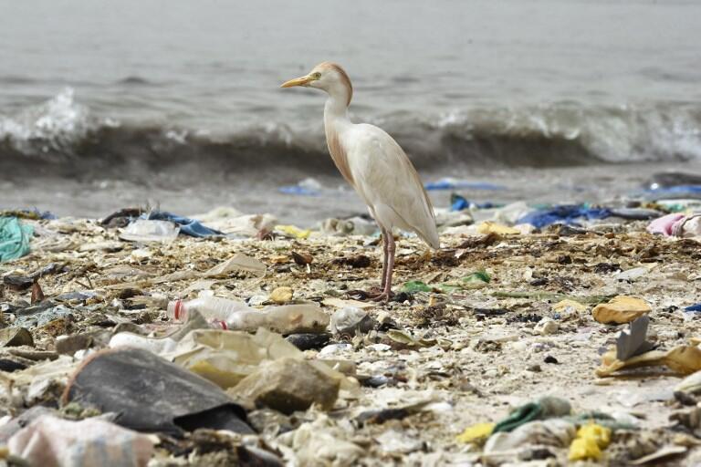 Selon les experts, si la production de plastique ne diminue pas, il pourrait y avoir en 2050 plus de plastique que de poissons dans les océans. (Photo d'illustration)